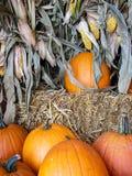 Autumn pumpkins in corn stalk Royalty Free Stock Photos