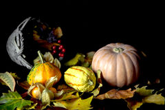 Autumn pumpkins and dried leaves Royalty Free Stock Photography