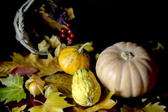 Autumn pumpkins and dried leaves Stock Image