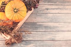 Autumn pumpkins and dry flowers flat lay Stock Image