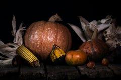 Autumn Pumpkins e milho em uma superfície de madeira rústica Thanksgivin imagem de stock royalty free