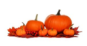 Autumn pumpkins and fall leaves border isolated on white. Autumn pumpkins and red fall leaves isolated on a white background Royalty Free Stock Photos