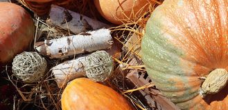 Autumn pumpkins and autumn flowers. stock images