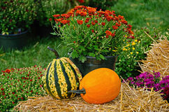 Autumn pumpkins and gourd Royalty Free Stock Photography