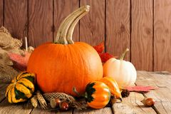 Autumn pumpkins and gourds arranged on wood. Autumn pumpkins and gourds arranged on a wooden background Stock Photo