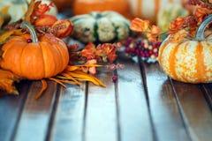 Autumn pumpkin background. Autumn pumpkins and gourds background Stock Image