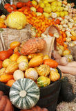Autumn pumpkins and gourds display Royalty Free Stock Image