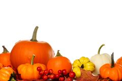 Autumn pumpkins and gourds isolated on white. Collection of autumn pumpkins and gourds isolated on a white background Stock Image