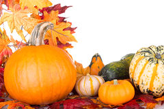 Autumn Pumpkins and Gourds Royalty Free Stock Photos