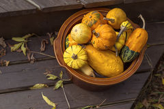 Autumn Pumpkins and Gourds Stock Photography