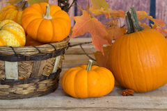 Autumn Pumpkins and Gourds Royalty Free Stock Photo