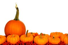 Autumn pumpkins, leaves, and berries border over white Stock Photos