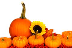 Autumn pumpkins, leaves, berries and sunflowers over white Stock Photos