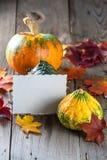 Autumn pumpkins Royalty Free Stock Images