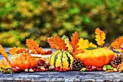 Autumn pumpkins on picnic table. Autumn concept with pumpkins, acorns, pine cones, berries, chestnuts and leaves on rustic wooden picnic table selective focus Stock Image