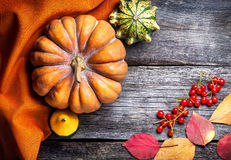 Autumn pumpkins Royalty Free Stock Photo