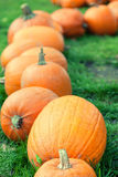 Autumn pumpkins in a row Royalty Free Stock Image