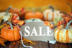 Autumn pumpkins with sale tag Royalty Free Stock Photos
