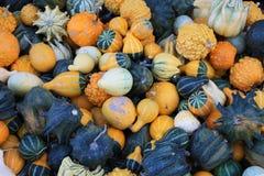 Autumn Pumpkins and Squash Stock Image