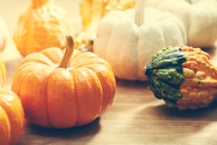 Autumn pumpkins and squashes Stock Photo