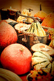 Autumn pumpkins with stalks in vintage style Royalty Free Stock Photos