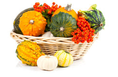 Autumn pumpkins in a straw basket Royalty Free Stock Photography