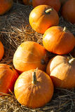 Autumn pumpkins on straw Royalty Free Stock Photos