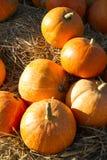 Autumn pumpkins on straw. Autumn orange pumpkins on straw Royalty Free Stock Photos