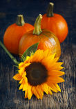 Autumn pumpkins and sunflower Stock Photos