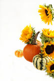 Autumn pumpkins and sunflowers Stock Image
