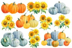 Autumn Pumpkins and sunflowers on a white isolated background. watercolor clipart.