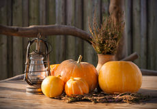 Autumn Pumpkins, The Thanksgiving day Background, Halloween Stock Photos