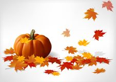 Autumn and pumpkins white background Royalty Free Stock Images