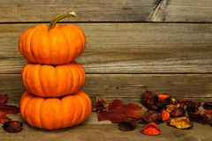 Autumn pumpkins on wood Royalty Free Stock Photography