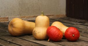 Autumn pumpkins on wooden background. Different type of pumpkins. Autumn background Stock Photo