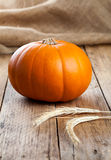Autumn pumpkins Royalty Free Stock Photos