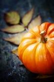 Autumn pumpkins Stock Images