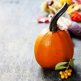 Autumn pumpkins Stock Photography