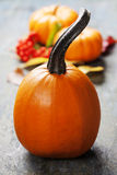 Autumn pumpkins Royalty Free Stock Image