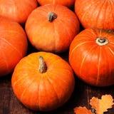 Autumn pumpkins on wooden board. Assortment of Pumpkin Stalks Stock Photography
