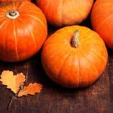Autumn pumpkins on wooden board. Assortment of Pumpkin Stalks Royalty Free Stock Photos