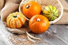 Autumn pumpkins Stock Image