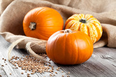 Autumn pumpkins on wooden board Stock Image