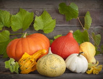 Autumn pumpkins on wooden boards Royalty Free Stock Image
