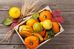 Autumn pumpkins on wooden table Royalty Free Stock Images