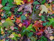 Autumn puzzle Stock Photo