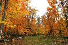 Autumn in Quebec, Canada, north America. Autumn in Quebec Canada north America royalty free stock photo