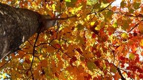 Autumn in Quebec. Canada, north America. Autumn in Quebec. Canada north America stock images