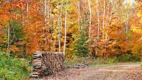 Autumn in Quebec. Canada, north America. Autumn in Quebec. Canada north America royalty free stock photos