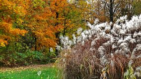 Autumn in Quebec. Canada, north America. Autumn in Quebec. Canada north America royalty free stock photo